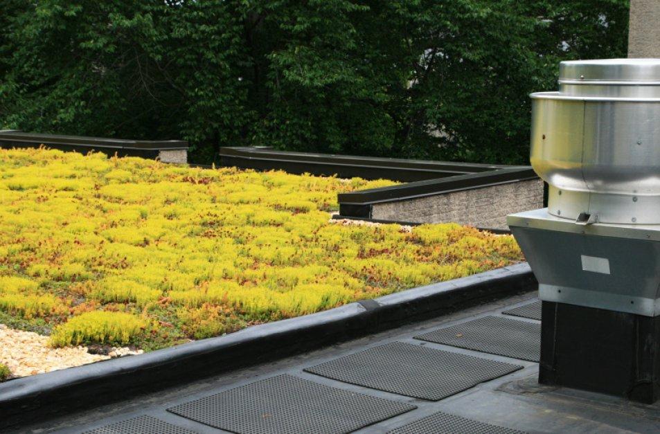 Bilde av et tak med mose og/eller gress